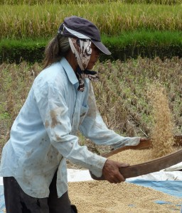 Sifting the Rice